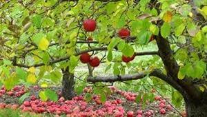 Fruit Trees North Georgia Master Gardeners